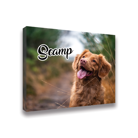 "16"" x 20"" Canvas Prints Scamp"