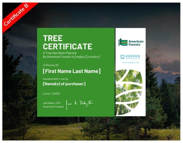 E-Certificate B